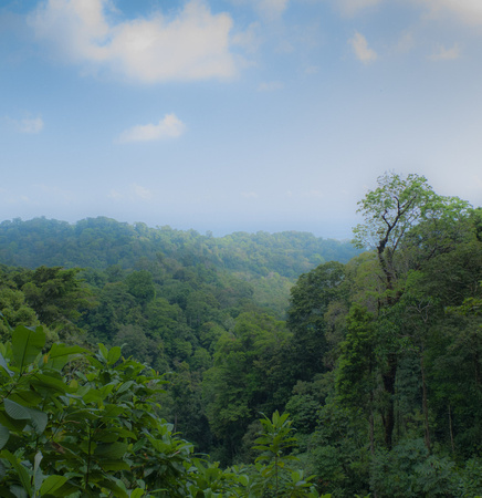 TNC images forest-